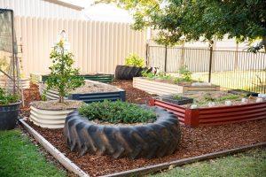 Vegie gardens at Dalby Beck Street Kindergarten